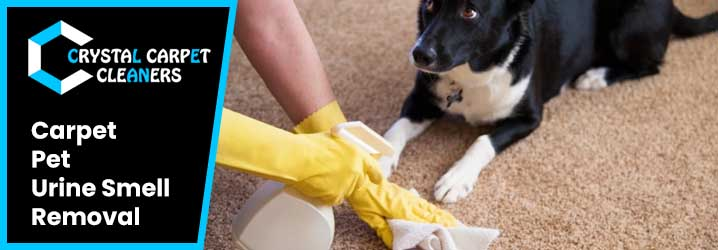 Carpet Pet  Urine Smell Removal