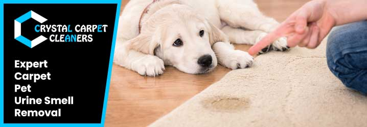 Expert Carpet Pet Urine Smell Removal